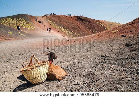Etna Landscapes