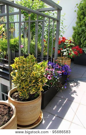 Beautiful Modern Terrace With Mix Of Summer Flowers