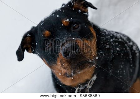 Winter Doggie Close Up