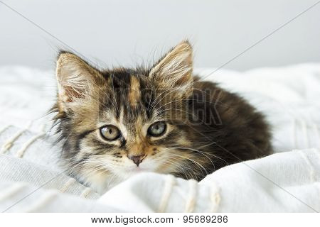 Cute Tabby Kitten Sitting On The Bed Cover