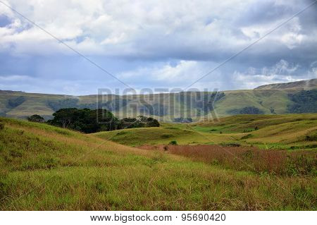 Simple And Beautiful View To Savanna With Little Patch Of Forest
