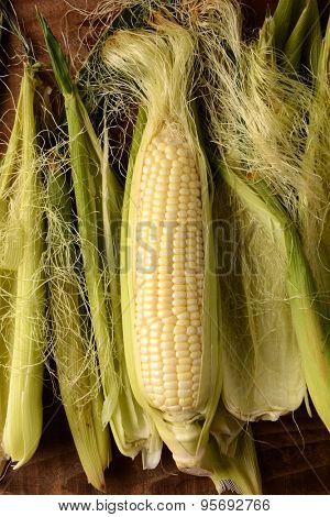A partially shucked ear of fresh picked corn on the cob. Surrounded by silk and husk in vertical format.