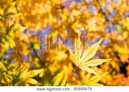Close up yellow leaf