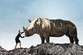 foto of rhino  - Businesswoman making effort to move huge rhino - JPG