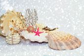 stock photo of mollusca  - Seashells on a white sparkling sandy beach - JPG