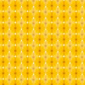 picture of cosmos flowers  - Yellow cosmos seamless pattern background - JPG