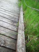 picture of wetland  - A wood boardwalk through the green wetland - JPG