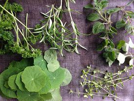 stock photo of nasturtium  - Freshly picked herbs ready for cooking  - JPG