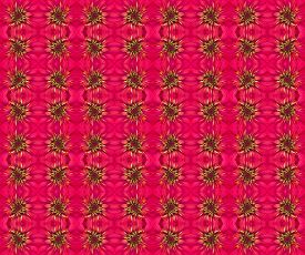 stock photo of zinnias  - Zinnias flower seamless pattern background - JPG