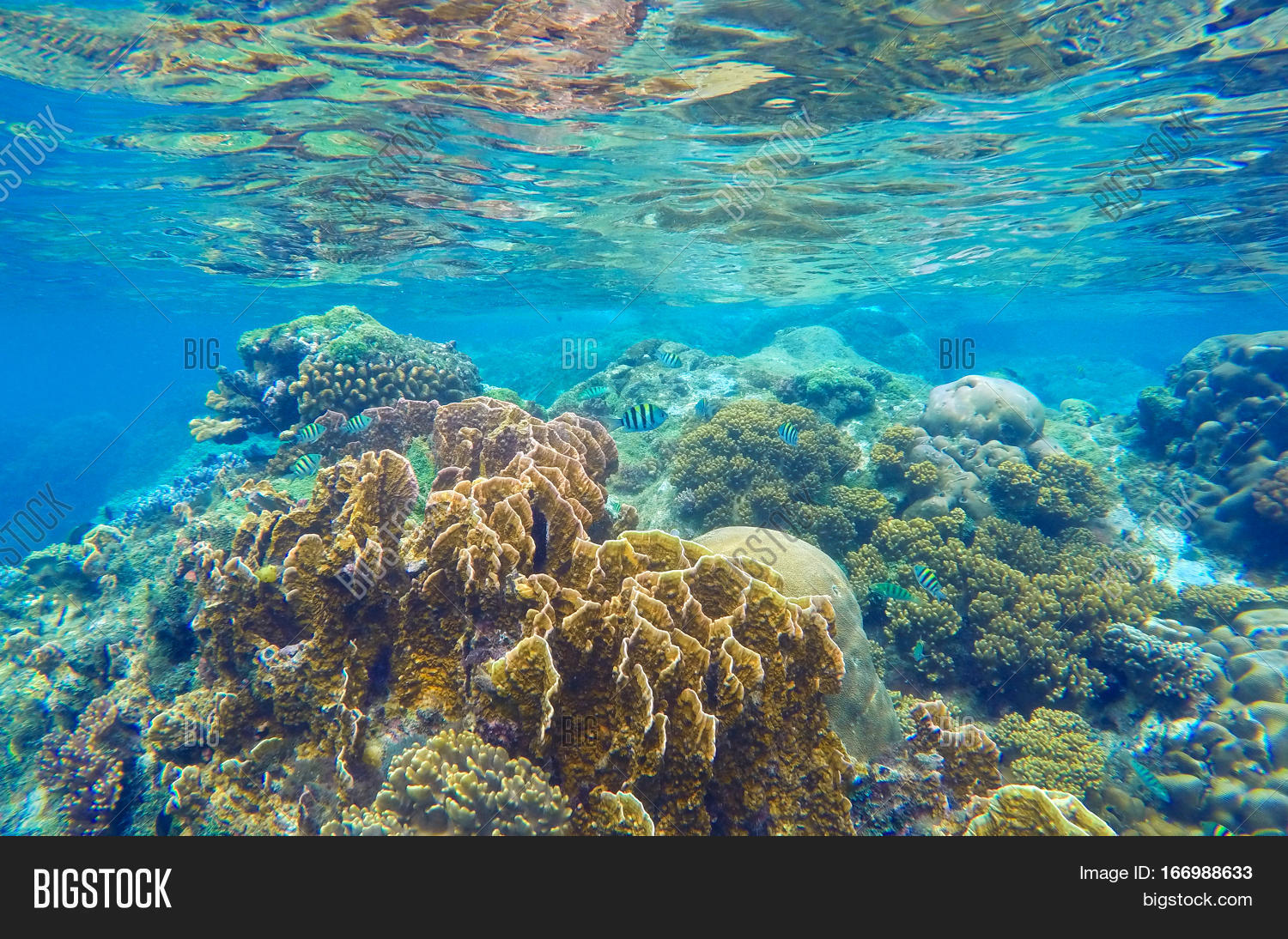nature coral underwater landscape - photo #13