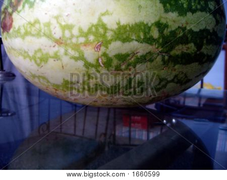 Water Melon - Benincasa Hispida