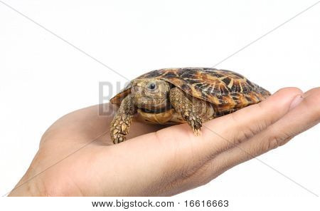 turtle in a hand