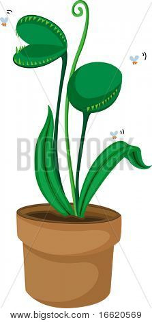 an illustration of a pot plant