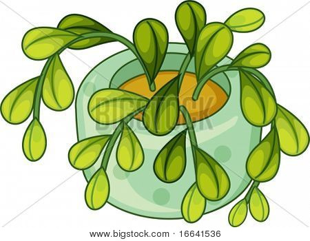 illustration of plant and pot on a white background