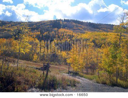 Autumn On The Grand Mesa 5