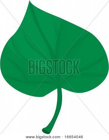 illustration of leaf on a white background