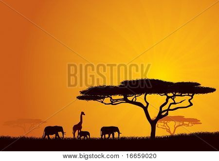 African Wildlife Background. Nature Background Series.