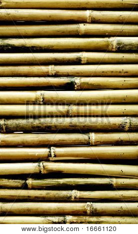 Old bamboo background. Natural texture collection.