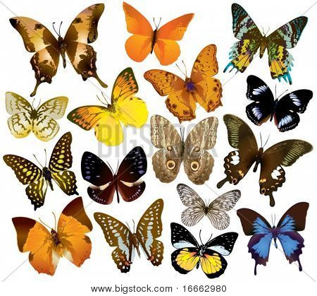 Vector Butterfly Collection