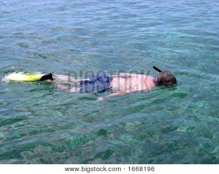 Snorkeling In Shark Alley