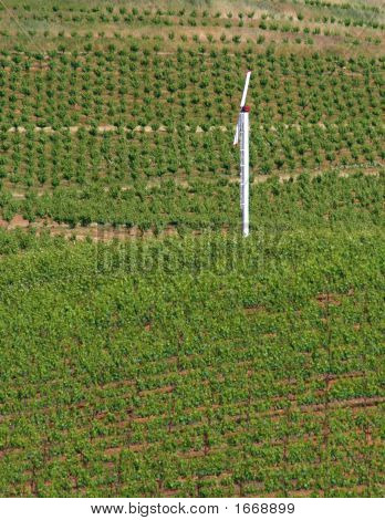 Windmill In Vineyard