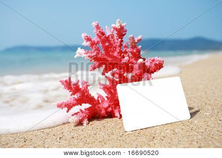 close up coral and emtpy card on beach