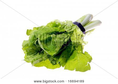 Butter Lettuce isolated on white