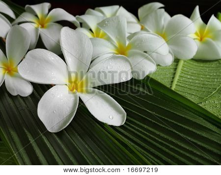 flores tropicales exóticas