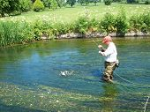 stock photo of mayfly  - Fly fisherman has hooked a brown trout on an English lowland chalkstream - JPG
