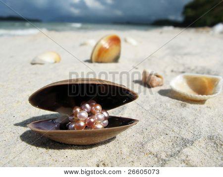 Seashells on a beach of Langkawi island, Malaysia