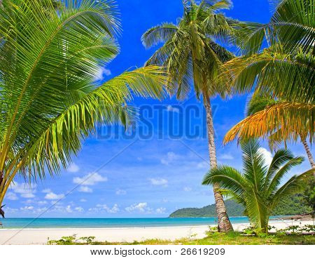 Palm tree forest on the tropical beach near sea water with sky background