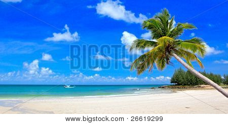 Palm tree over summer beach and remote boat in sea water