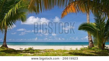 Calm beach with palm