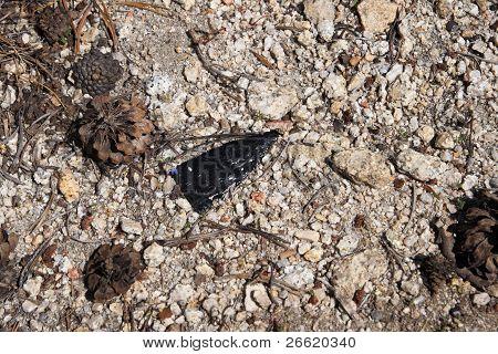 Broken Arrowhead On Ground
