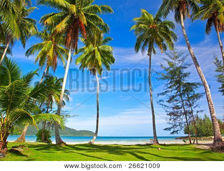 Coconut palm trees on green grass near tropical beach