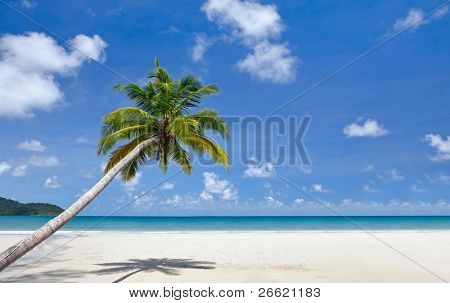 Palm tree over sandy beach