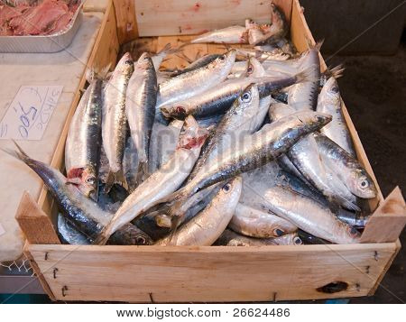 container of fresh blue fish  in a fish shop