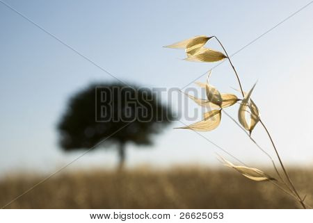 stem of plant at sunset on background silhouette solitary blurred tree