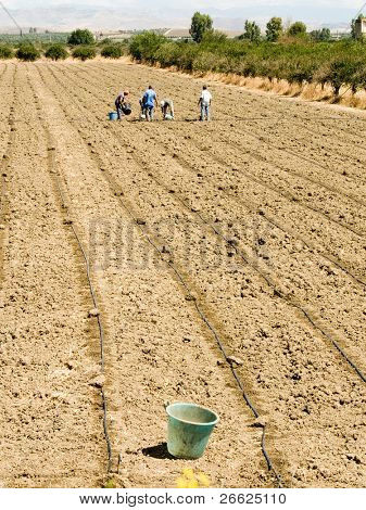 workers working in the fields  (bucket)