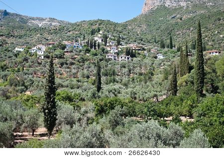 typical landscape with cypress, olives trees and houses on a hill of the Greece
