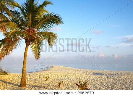 Dawn Tropical Beach