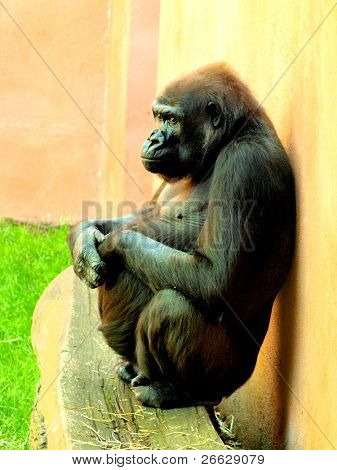Gorilla sitting on a bench