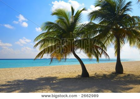 Two Palms Are On A Tropical Beach