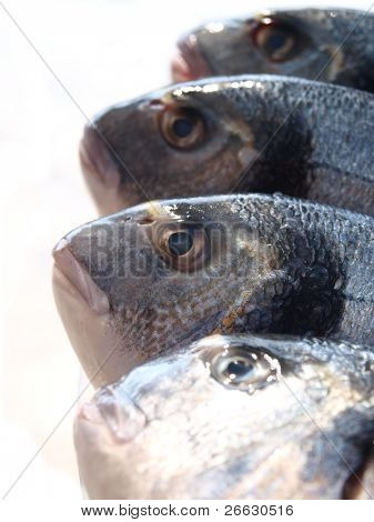 Fish  (Uncooked fish (sparus auratus)on a plate on white background