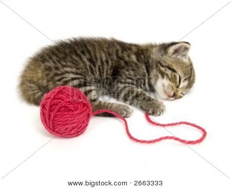 Kitten Taking A Nap On White Background