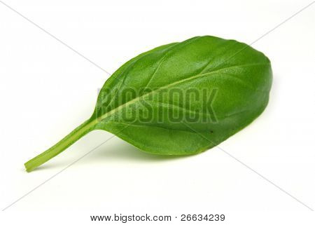 Green basil leaf on white background