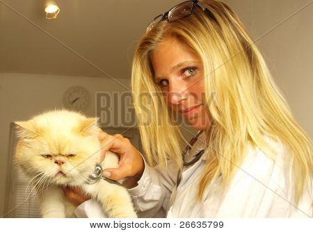 Beautiful blond young  Veterinarian examining a cat