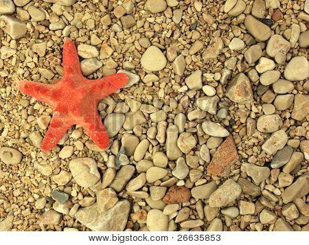 Starfish on grit