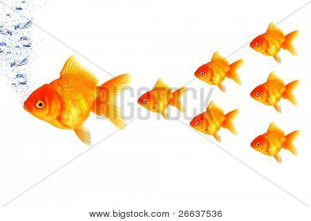 SMall golden fish following the big one