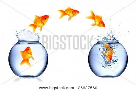 Golden fish jumping from aquarium